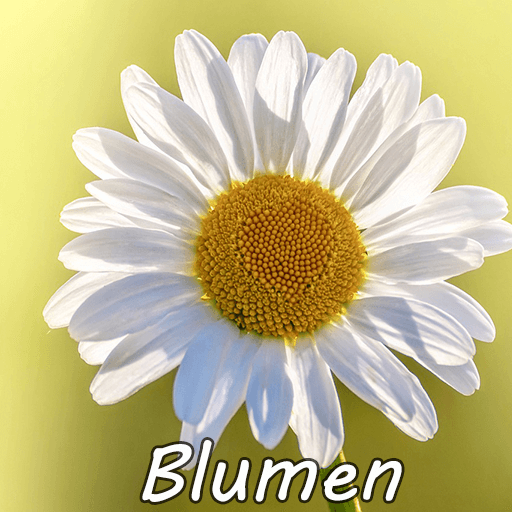 Cocktail Blumen